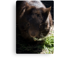 A Wombat Named Florence Canvas Print