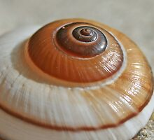 She sells Snail Shells by the Sea Shore  by Sim Baker