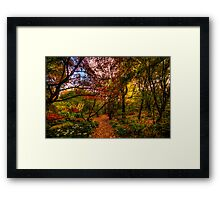 Autumn Leaves - Mount Wilson, Blue Mountains - The HDR Experience Framed Print
