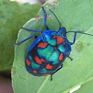 Bright Blue Patterned Hibiscus Beetle. by Mywildscapepics