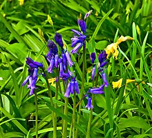 Bluebells #2  (Spring - May) by Trevor Kersley