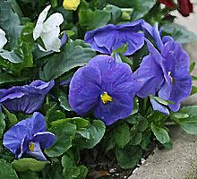 Pansy Pot by Monnie Ryan