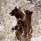 Black Bear Sow and Cub by cavaroc