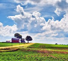 Spring Fields by Nadya Johnson