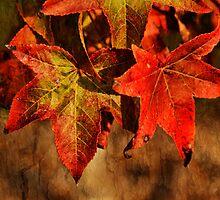 Autumn Hues by Dulcie Dal Molin