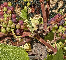Grapes for Wine by Renee D. Miranda