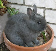 I am a Little Potted Bunny Rabbit by Michael Vickery