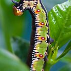 Caterpillar Dance by Belle Farley