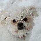Buddy - Fun, Fun in the Snow! by Sharon A  Bunting
