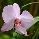 An Orchid Smile by Tony Wilder
