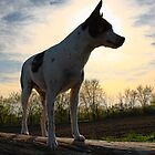 Spanky at Sunset by Nancy (Peaches) Harker