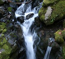 Stream below Fall Creek Falls, Glide, Oregon by CatrinaM