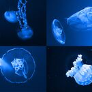 Jellies by James  Birkbeck