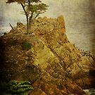 Lone Cypress by Laura Palazzolo