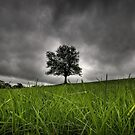 Lonely tree by Laurent Hunziker