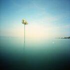 Beach Basket by Lupinol