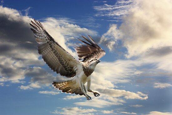 I Can Fly by byronbackyard