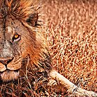 Lion Eyes - Ngorongoro Crater Conservation Area - Tanzania by Scott Ward