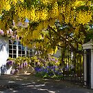 Laburnam Cottage by Geoff Carpenter