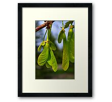 Waiting to Fall Framed Print