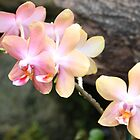 Sunrise, Sunset Orchids by Kelley Shannon