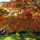 Autumn at Patanga - last sun rays by Puppy2