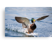 Happy Landing Canvas Print
