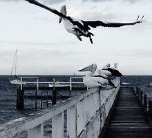 Sorrento and the joy of flight by sebastian