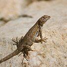 Lizard having fun by Bonnie Pelton