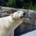 Polar Bear by Bob Hortman