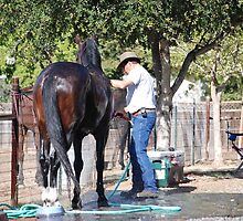 Horse Wash by Cupertino