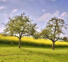 Apple trees by Mario Curcio