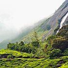 A tea garden. by debjyotinayak
