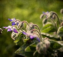Bees in the Borage by Boston Thek Imagery