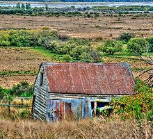 Old Shed by Julie Teague