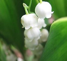 Muguet Bells by MarianBendeth