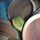 Green Moray Eel by wayatsagi