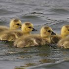 gosling group by Idano