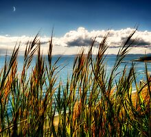 May Seascape  by Nick  Kenrick Photography