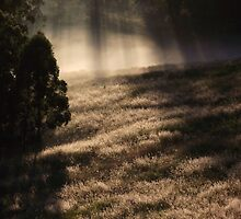 "'Morning Grass"" by debsphotos"