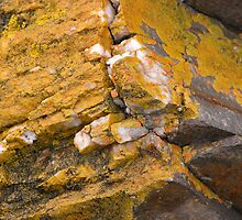 Quartz and Lichen, Sulphur Creek, Tasmania, Australia. by kaysharp