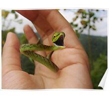 Green Vine Snake Poster