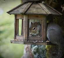 Squirrel In Birdfeeder  by Jonice