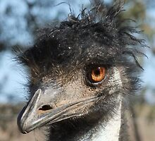 """Look what the emu oil did to my hair!"" by Enivea"