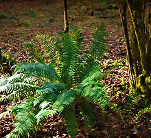 Golden Hours of the Fern by DonDavisUK