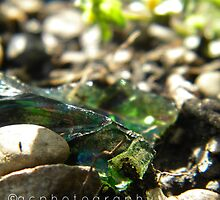 glass shard. by alexandriac