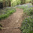 Woodland path West Malvern by LisaRoberts