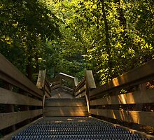 Morning Stairway by Adam Bykowski
