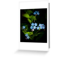 Forget Me Nots...please Greeting Card