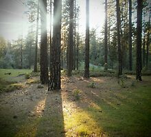 Sunrise trees, Bear Creek, Darling Ridge, Garden Valley, CA by LisasPics